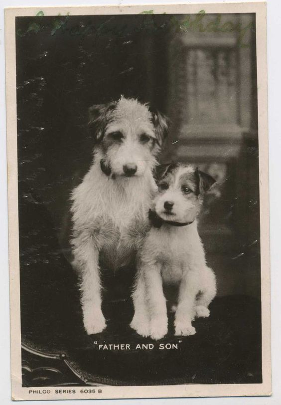 Two Little Terrier Dogs Father & Son Vintage Real Photo Postcard Z