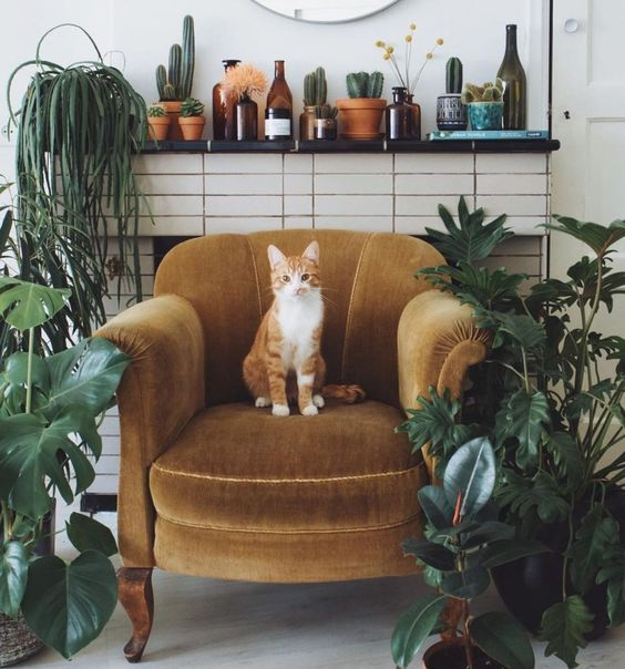 This mix of vintage glass bottles and potted cacti is purr-fect.