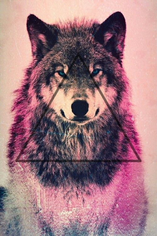 wallpaper loup fond - photo #47