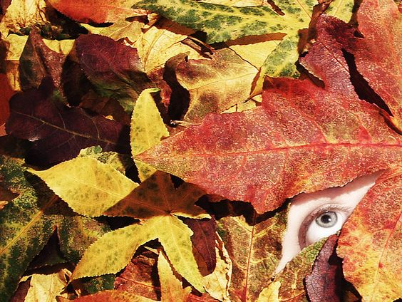 i found a book on how to be invisible  on the edge of the labyrinth  under a veil you must never lift  pages that you must never turn...    ...is that the wind from the desert song?  is that the autumn leaf falling?  or is that you walking home?  is that a s Good to know!