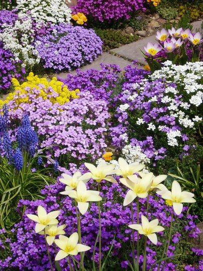 Purple, Yellow, White Flower Garden