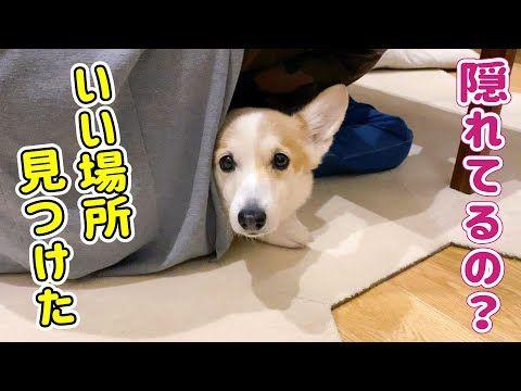 外は雪が降っていて寒いけれども 家の中は暖かい コーギー犬のノエさんは息子くんと遊んだり ママさんとじゃれたり パパさんに遊んでもらったり なんて幸せそうな家族 ノエさんがそこにいるだけで みんながハッピーな気持ちになります Yahoo Japan