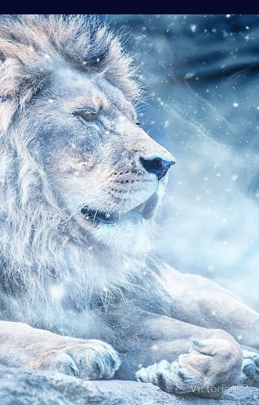 Frost Lion Iphone Case By Victorious2 Lion Wallpaper