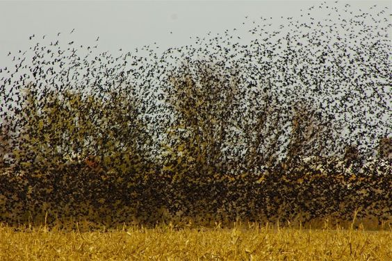 3. In 2011, more than 1,000 blackbirds fell from the sky over Beebe, Arkansas. Why? Well, it's the apocalypse, of course. No, it's aliens. Maybe a secret government weapon? Actually, no one really knows.