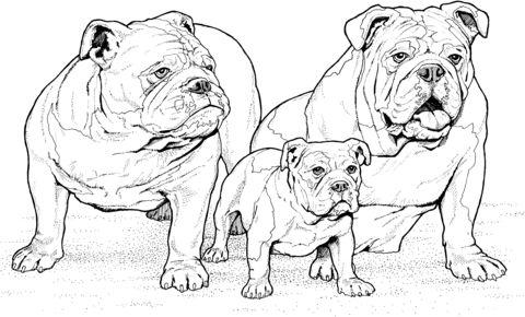 Englische Bulldoggen mit Welpe Ausmalbild