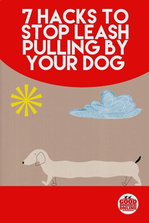 Ultimate Canine Dog Training Julie Case Dog Training Upper East