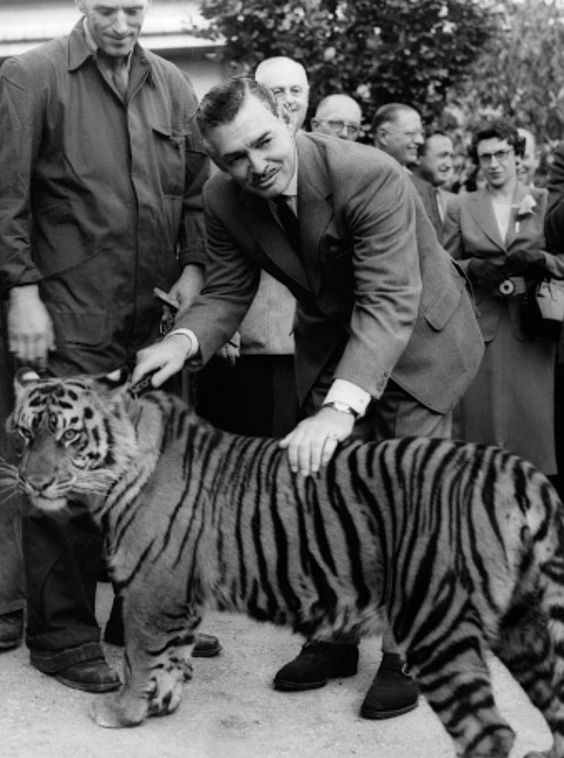 Clark Gable with a tiger. Wow  love that Tiger he's holding on to!