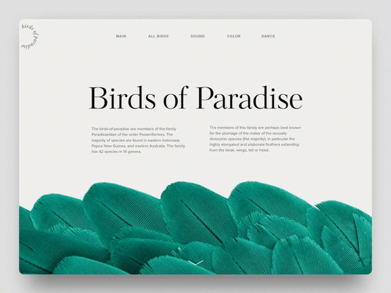 Une transition de page tout en légerté exploitant la beauté du plumage de ces magnifiques oiseaux. Si vous souhaitez les voir en vrai, réservez un vol pour Sorong (Papouasie occidentale).