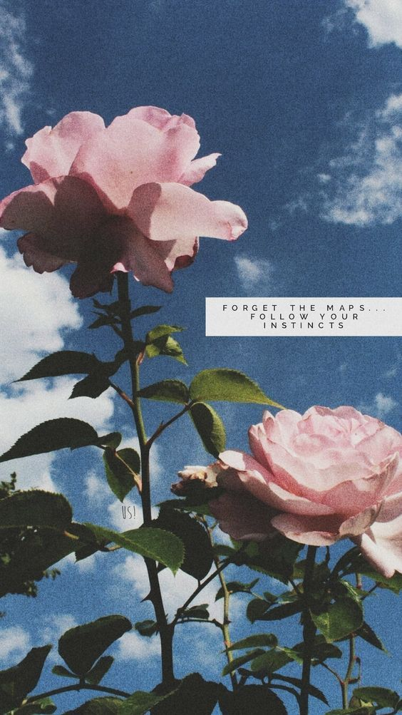 Forget The Maps Follow Your Instincts Flowers Quotes Tumblr Wallpaper Quotes Flower Quotes Flower wallpaper with quotes
