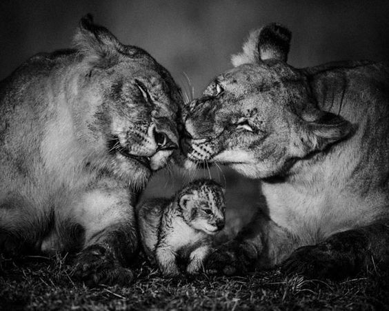 Fauna extraordinária da África, em preto e branco, pelo fotógrafo francês Laurent Baheux