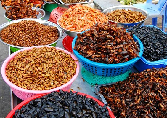 Côn trùng - một đặc sản độc đáo ở Campuchia