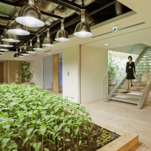 Great, sustainable concept.  I would love to work in an environment like this!   Pasona Urban Farm by Kono Designs