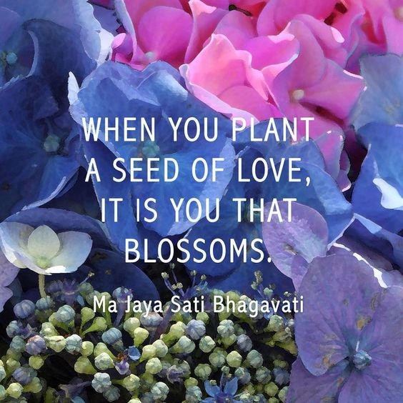 Pretty As A Flower Quotes: Plant Seeds Of LOVE. #love #pretty #flowers #quotes #seeds