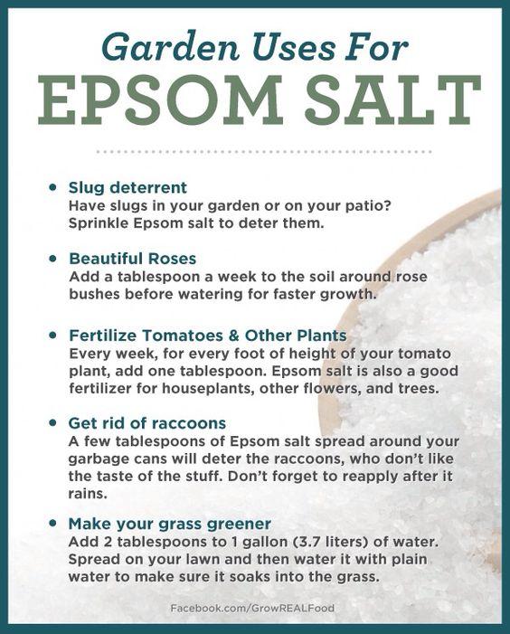 Epsom Salt Uses Gardens Pinterest Gardens Epsom