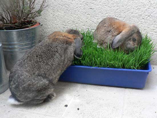 Habitat du lapin de compagnie-Marguerite et Cie-