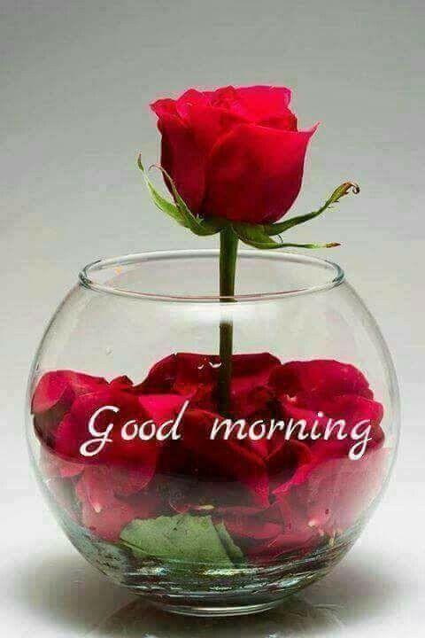 Good Morning Good Morning Flowers Good Morning Good Morning Beautiful