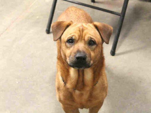Phoenix Az Beagle Meet Gino A Dog For Adoption Pets Kitten