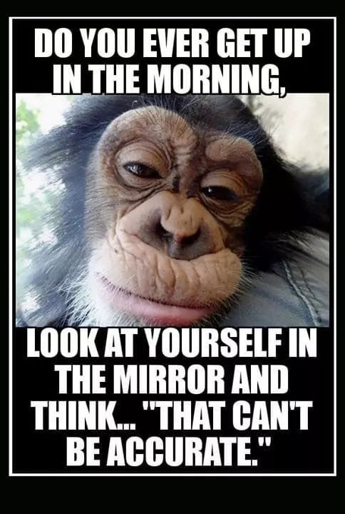 I Try Not To Look In The Mirror Morning Quotes Funny Funny Good Morning Quotes Funny Quotes
