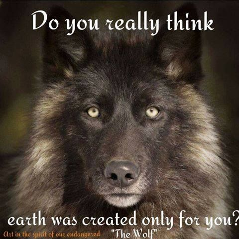 SAVE THE WOLVES: