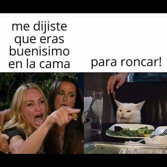 Caiste Doglovers Catloversworld Dogloversofinstagram Memesrlife Doglover Dogslovers Catlovers Meme Memes Funny Memes Cat Memes