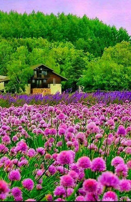 一軒家と綺麗で美しい花畑