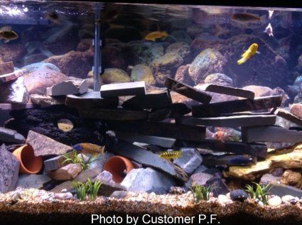 déco aquarium amazon