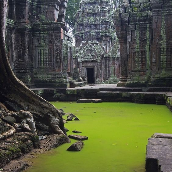 """Ta Prohm•Angkor•Cambodia, built largely in the late 12th and early 13th cent"