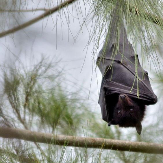 Bats of all kinds are good for our ecosystem