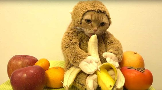 gato-mono