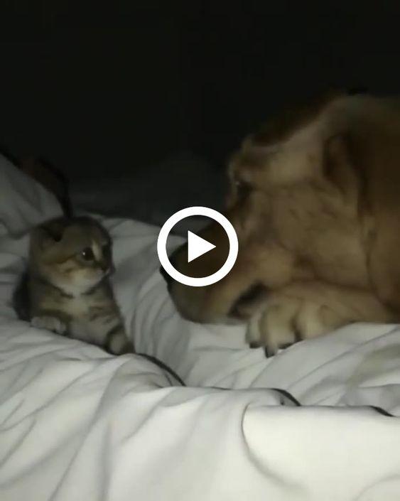 Filhote se defende de ataque do cão