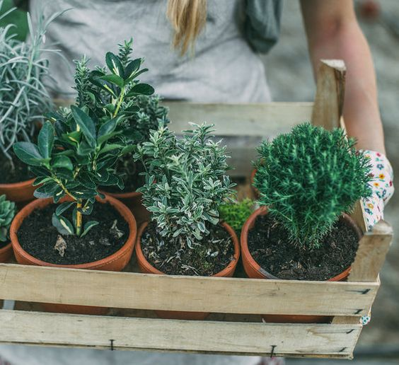 Many herbs, plants and flowers that grow in your backyard can be used for your own essential oils and beauty treatments.