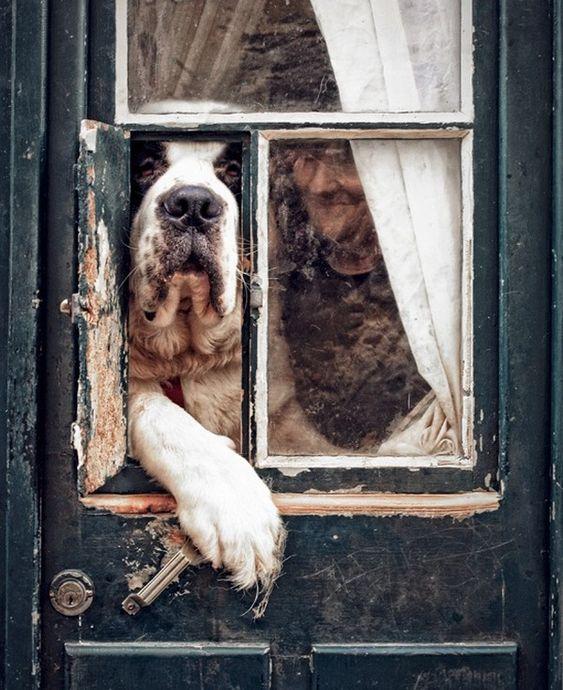 Прикольные фото животных. (2)