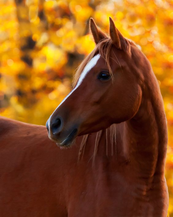 I can picture myself riding bareback in autumn through a wood where all the leaves are changing colors on this horse...