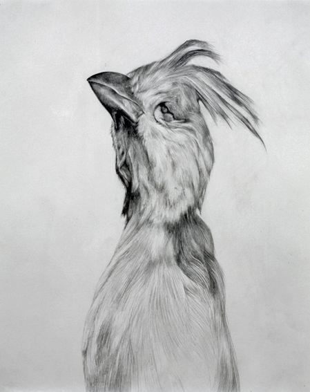 Leah Williams | Melbourne Based Visual Artist | Works | Bird Drawings