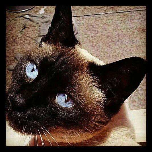 Minha sofia e seus lindos olhos azuis.