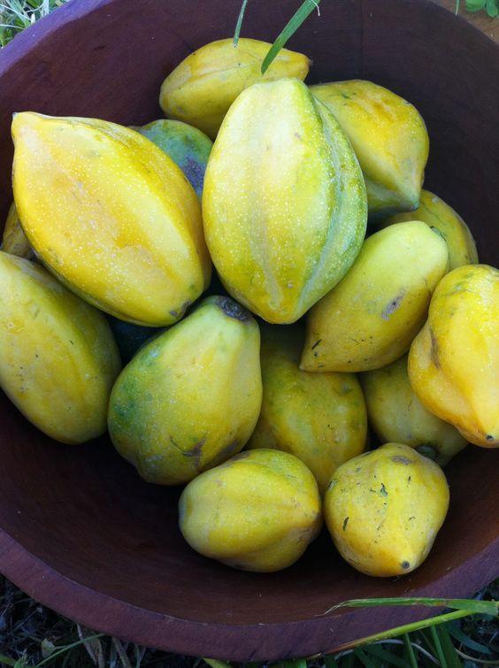 Papayas chilenas