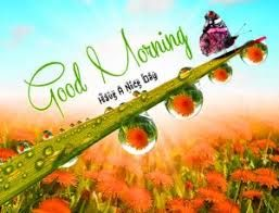Best 3d Gud Mrng Picture Hd Download Good Morning Images Morning Pictures Morning Images