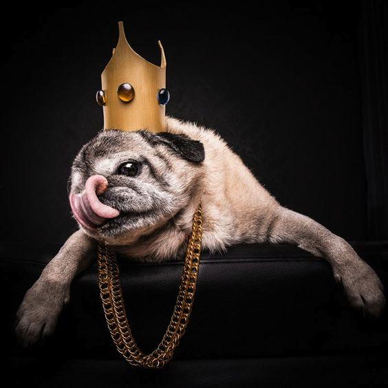 The_Pug_Life_Adorable_Portraits_Of_Lovable_Pugs_Dressed_As_Hip_Hop_Artists_2015_02