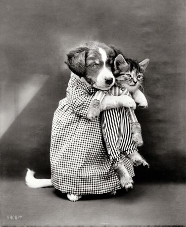 "HOW did they do this?     ...1914. ""Puppy 'mother' in costume holding kitten 'baby'."""