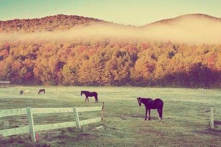 fall horses