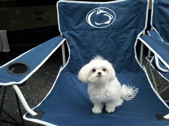 the tiniest tailgater!