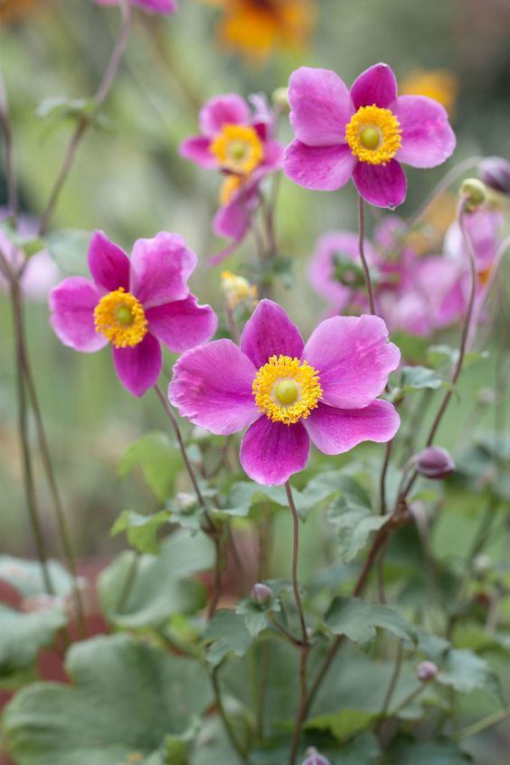 Gorgeous Fall Plants And Flowers For Your Front Yard Beautiful Flowers Garden Fall Flowers Fall Plants