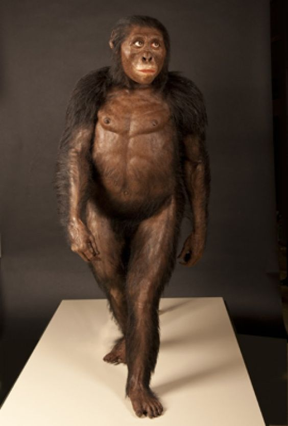 The famous skeleton Lucy has had a makeover, thanks to newly discovered fossils. A reconstruction of the 3.2-million-year-old hominin emerge...