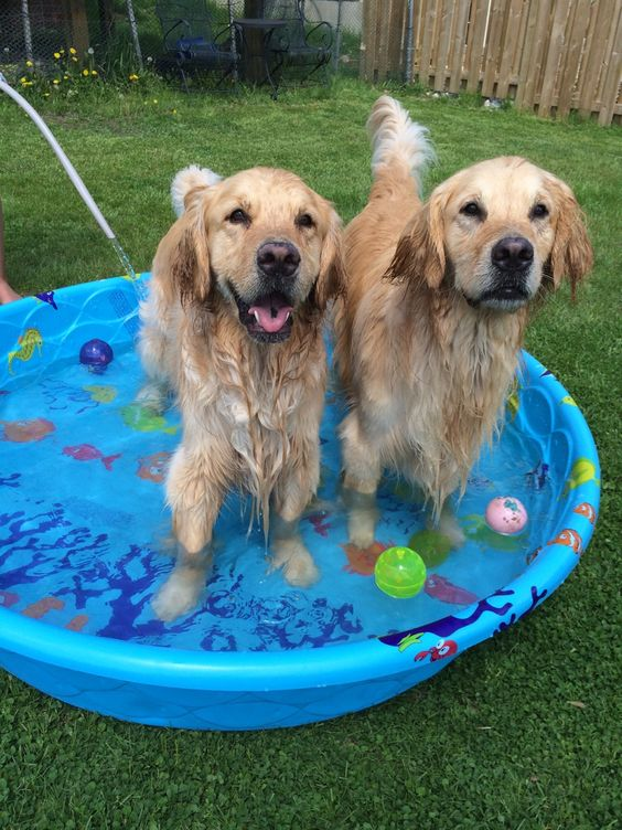 More dogs in baby pool...