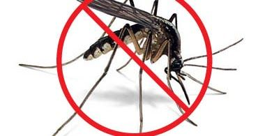 How to Prevent Mosquitoes This Summer      Mosquitos they are not just annoying, But they are Dangerous  Mosquitoes Despite their small siz...