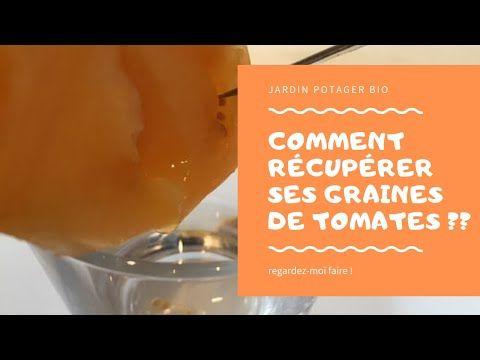 Recuperer Et Conserver Les Graines De Tomates Decouvrez Les 4