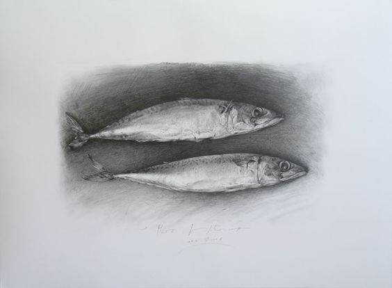 fish drawing in pencil - Google Search
