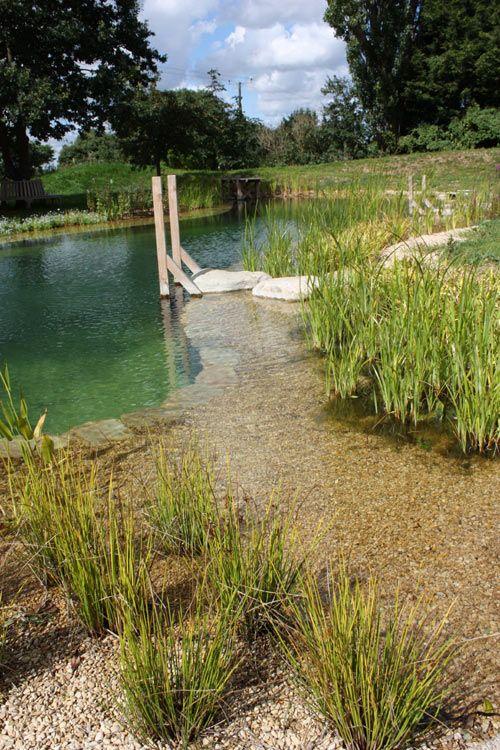 Natural swimming pond designs swim pond pinterest for Pond dam design