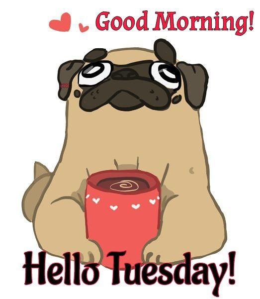 Pin By Lynn On Good Morning Pug Pug Memes Happy Dogs Hello Tuesday