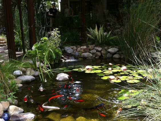 Garden koi fish pond this reminds me so much of my uncle 39 s for Koi ponds and gardens